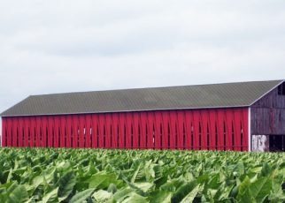 Tobacco shelter in the field